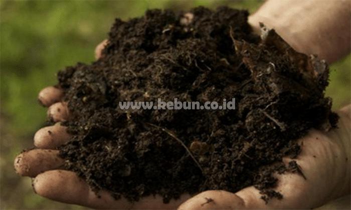 Manfaat Kompos