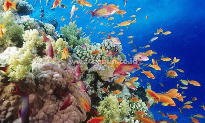 Jenis Biota Pakan Ikan Yang Hidup Di Air Tawar Adalah oleh - seputarperkebunan.xyz